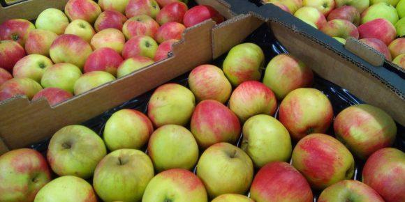 Worcester Apples (7kg)