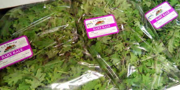 Baby Kale (500g)