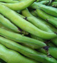 Offer: UK Broad Bean (5kg)