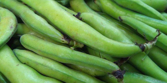 UK Broad Bean (5kg)
