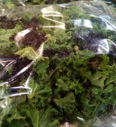 Offer: UK Pre Packed Mixed Kale (10 x 250g)