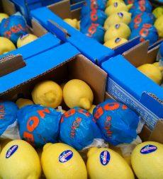 Offer: Turkish Lemons (54's)