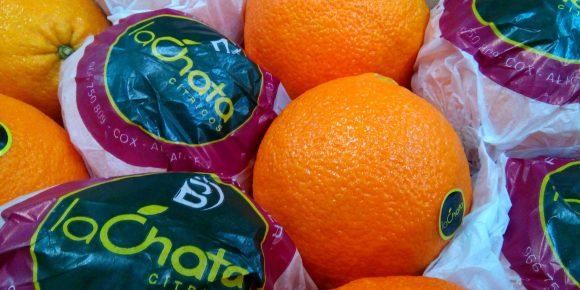 Large Oranges (18 & 24 Count)
