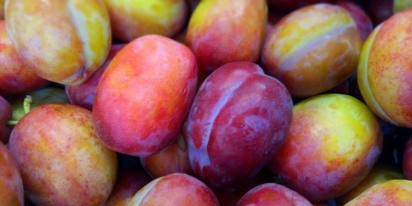 English Victoria Plums (5.45kg)