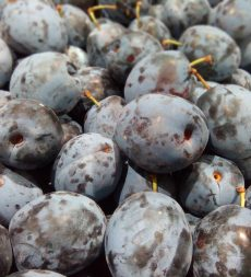 Offer: English Blue Plums (5kg)