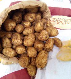 Offer: UK Maris  Bard Potatoes (25kg)