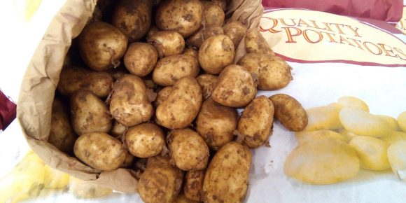 UK Maris  Bard Potatoes (25kg)