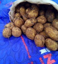 Offer: Humdinger Scraping Potatoes (20kg)