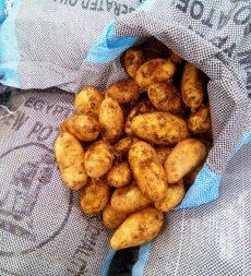 Offer: Egyptian New Potatoes (20kg)