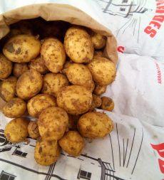 Offer: Kent New Potatoes (12.5kg)