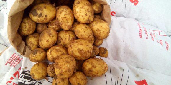 Kent New Potatoes (12.5kg)
