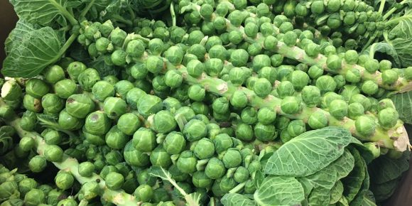 Sprout Stalks