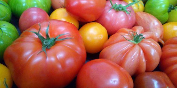 UK Heritage Tomatoes (3kg)