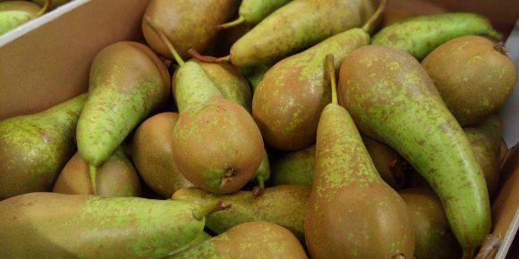 UK Conference Pears (10kg)